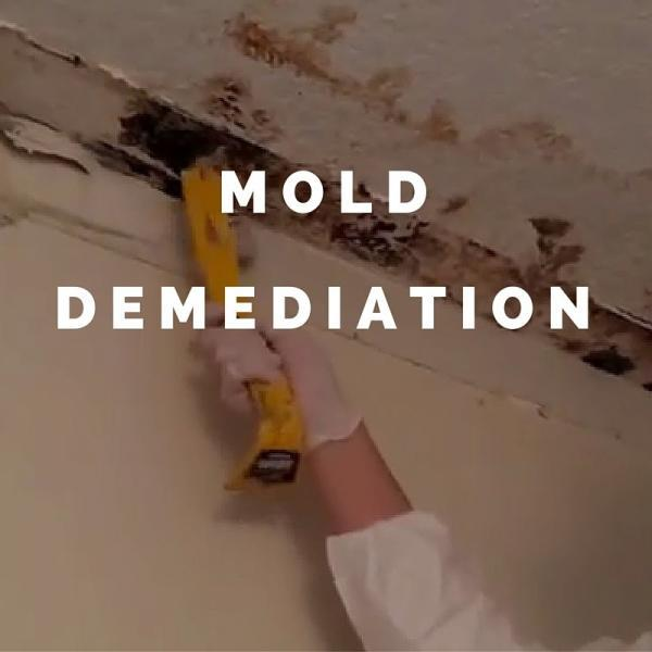 Boise Mold Demediation services