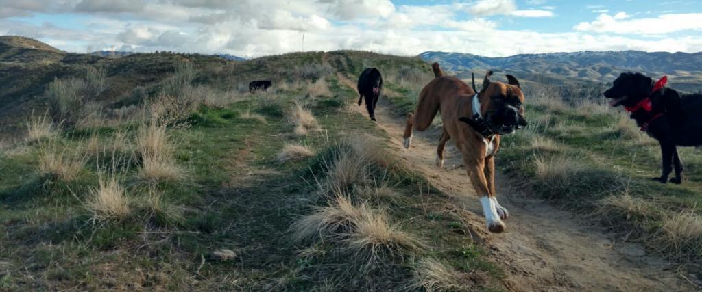 Boise foothills homes for sale