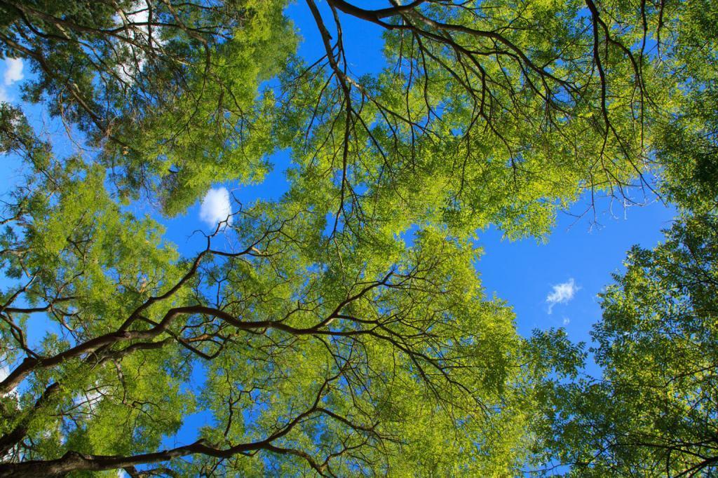Green Trees Boise Idaho